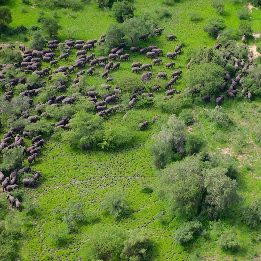 Elephants at Zakouma National Park, a highlight of travel in Chad.