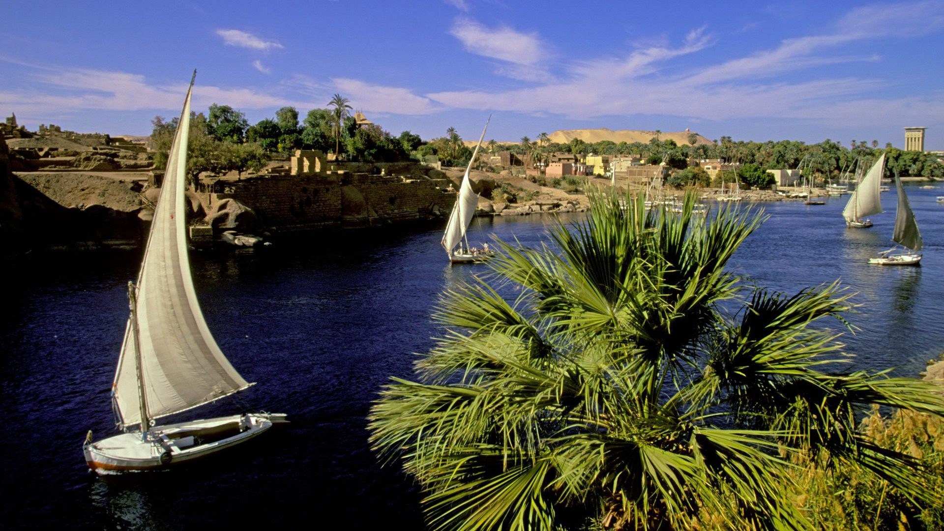 Feluccas sailing on the Nile River near Aswan, Egypt