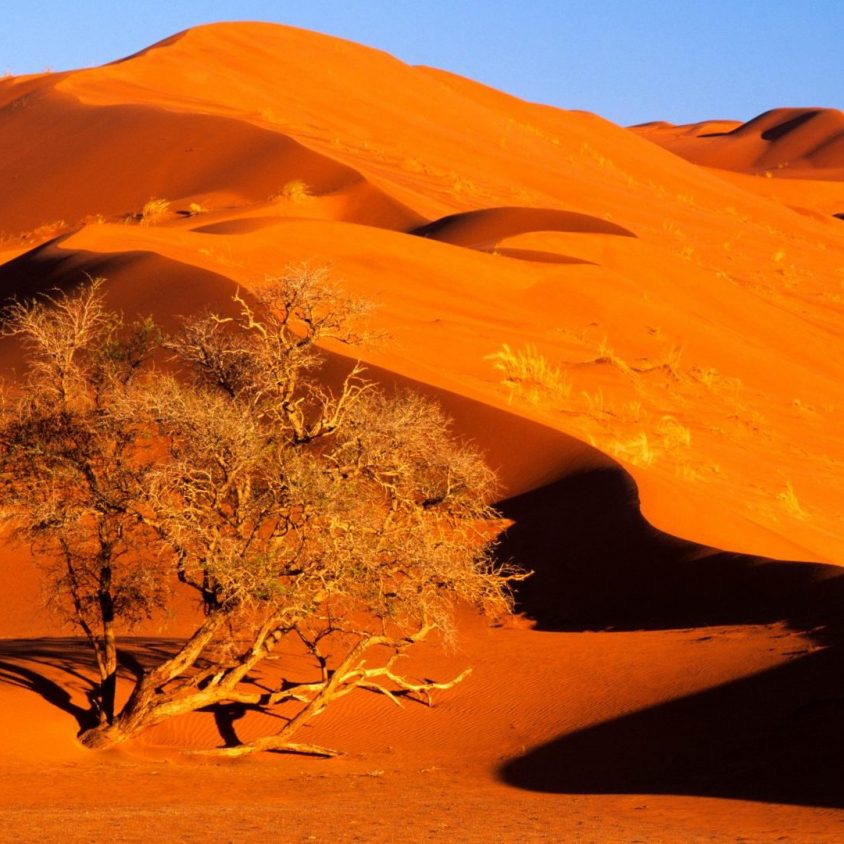Elim Dune towering over an acacia tree in Namib Naukluft Park, Namibia