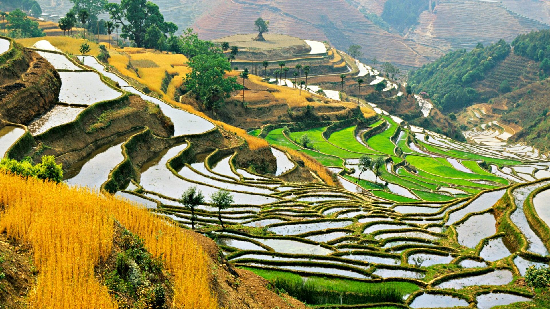 Green and gold fields of autumn in Hani people's Cloudy Sea Terrace, in Yunnan, China, with GeoEx