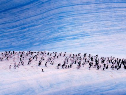 Chinstrap penguins on an iceberg, Antarctica with GeoEx