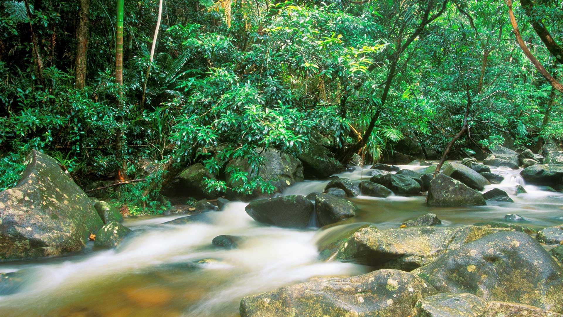 Rainforest Daintree NP, Queensland, Australia