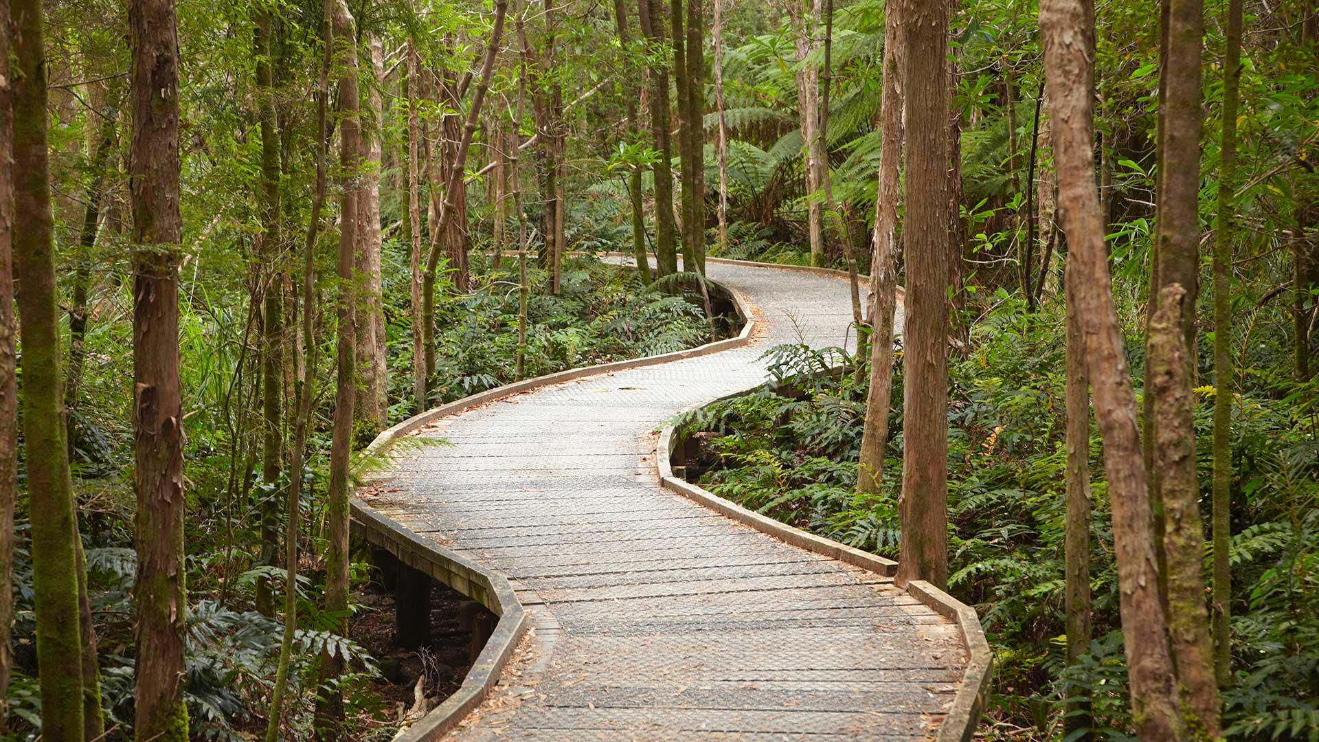 Boardwalk to Nelson Falls, Franklin - Gordon Wild Rivers National Park, Western Tasmania, Australia