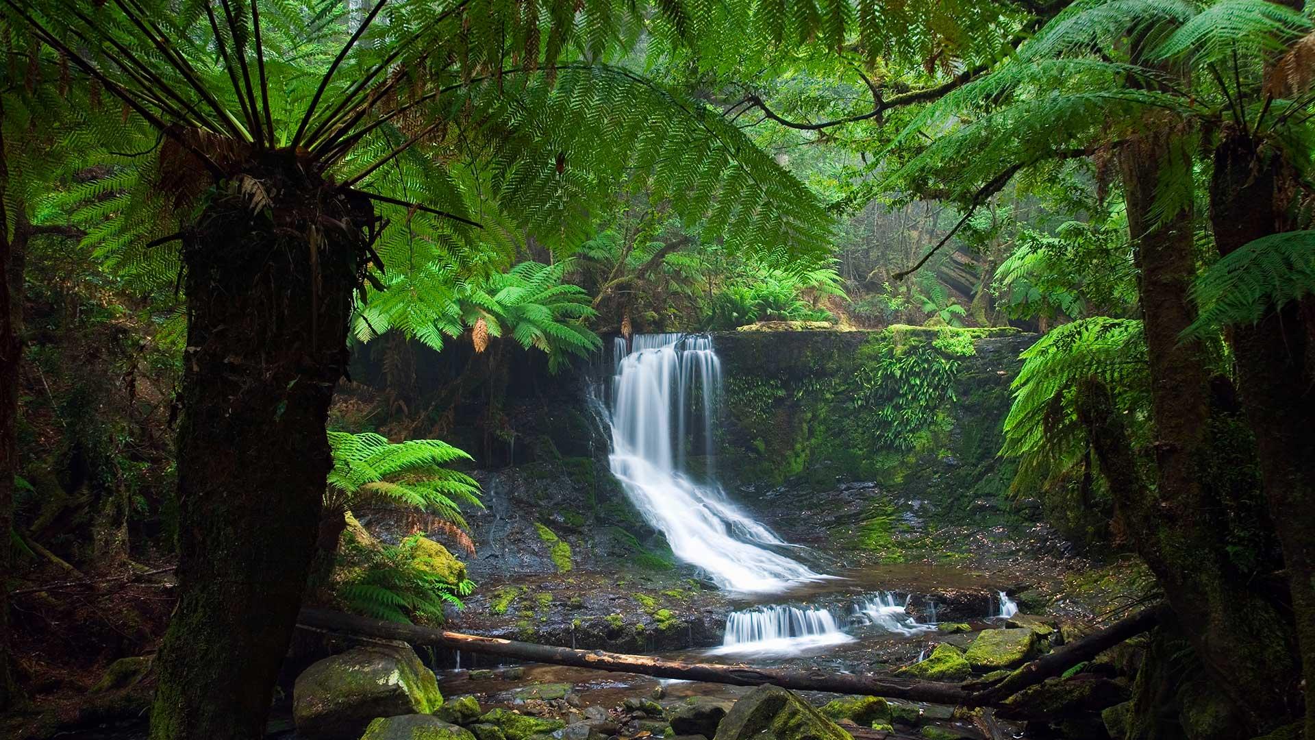 Mt Field National Park. Horseshoe Falls