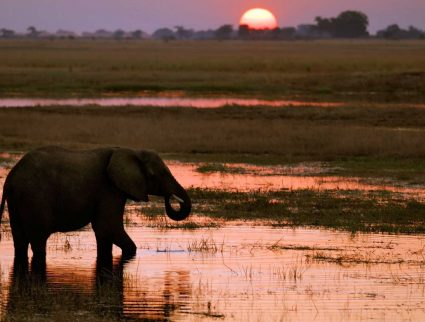 Chobe, Botswana. An elephant at sunset on the Chobe River.