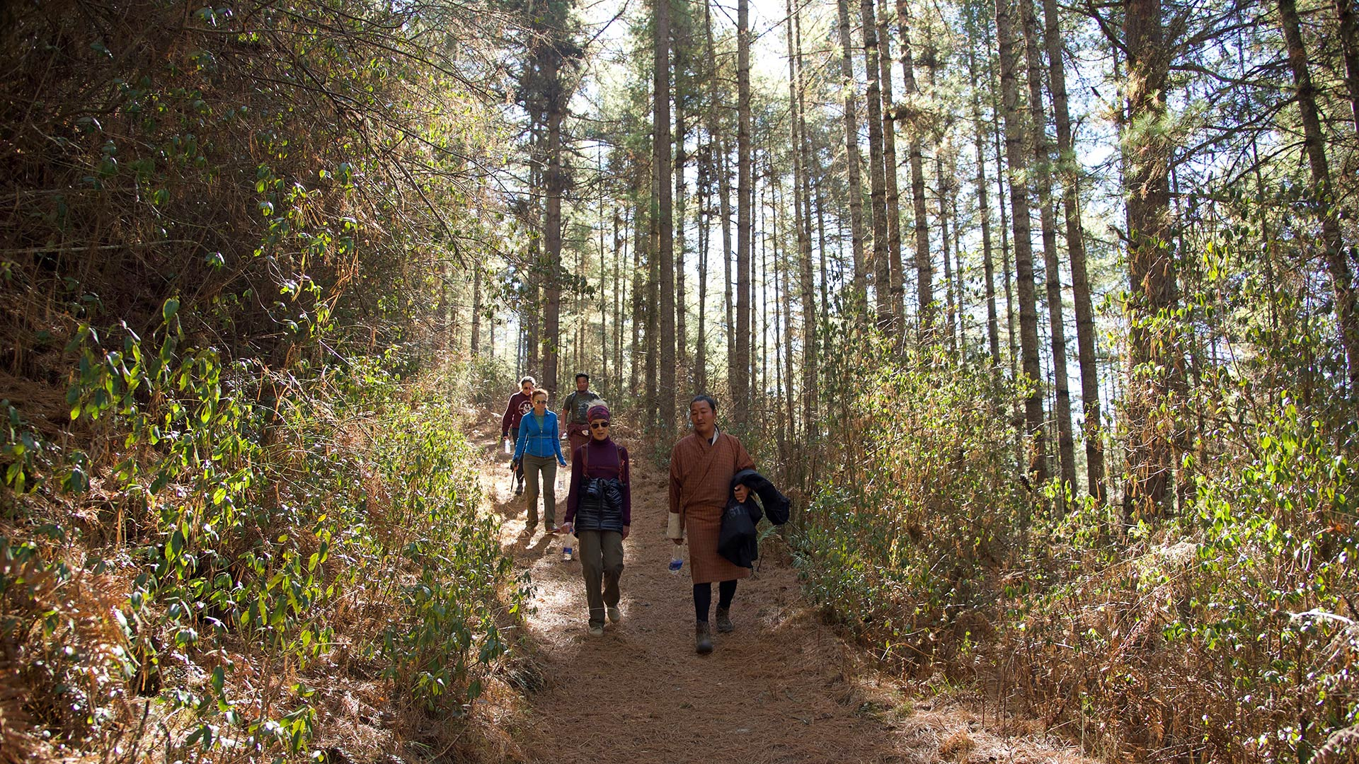 Hikers along a trail in the forests of Bhutan