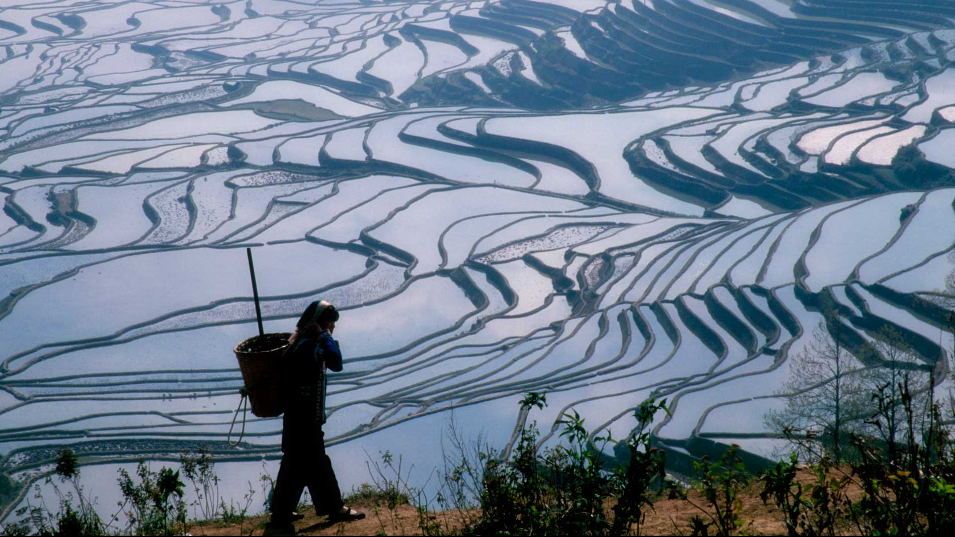 Hani girl carrying a basket amid rice terraces of the Yunnan Province, China with GeoEx