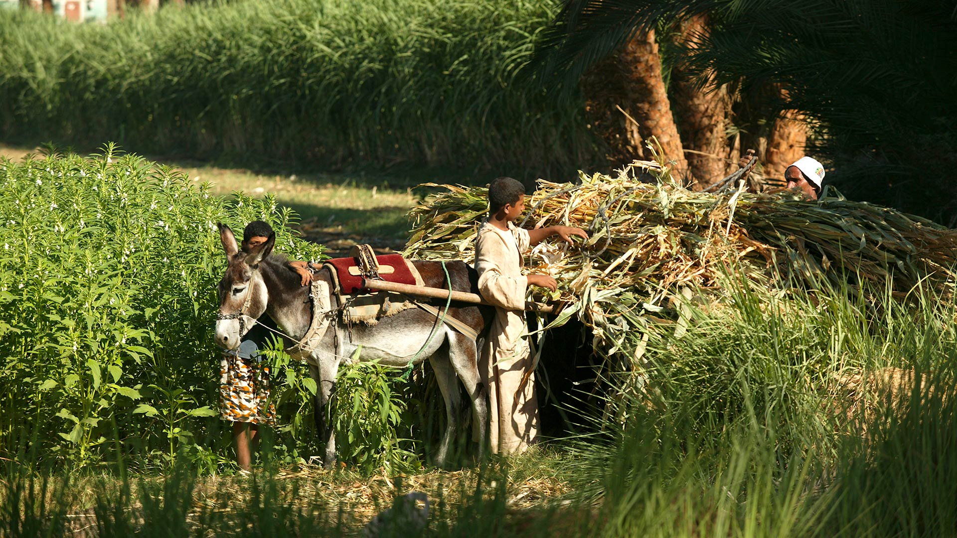Farmers along the canal of the West Bank near Luxor, Egypt