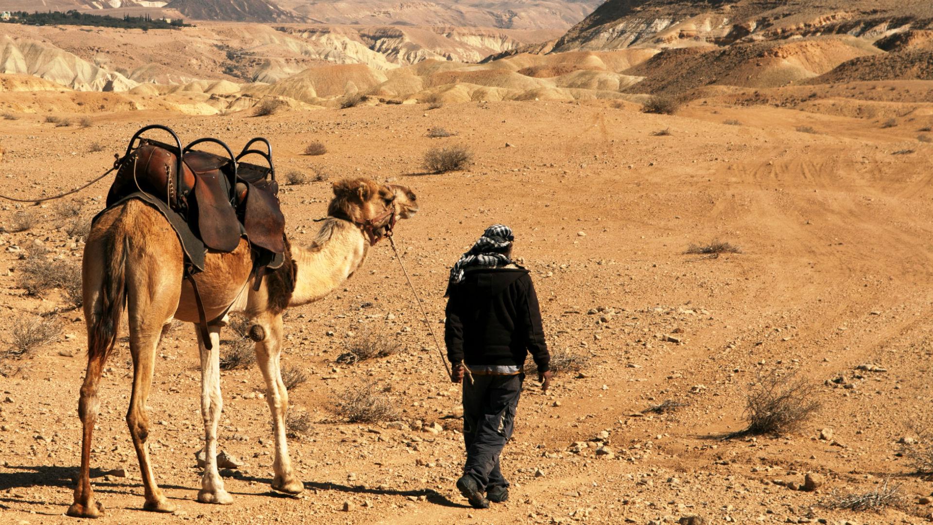A Bedouin man walks with a camel across the desert,Negev Desert, Israel.