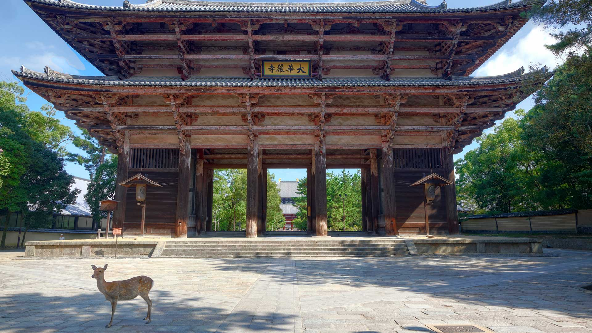 Deer in front of Todai-ji Temple, Nara