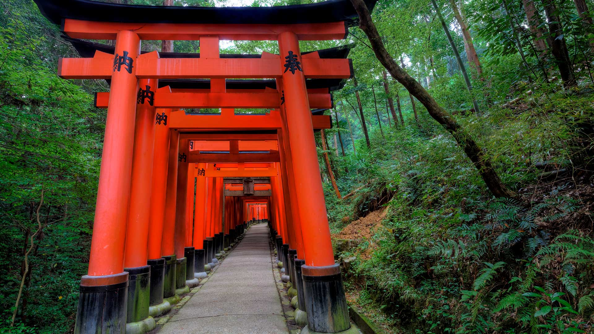 Torii Gates in the Fushimi-Inari-Taisha Shinto Shrine