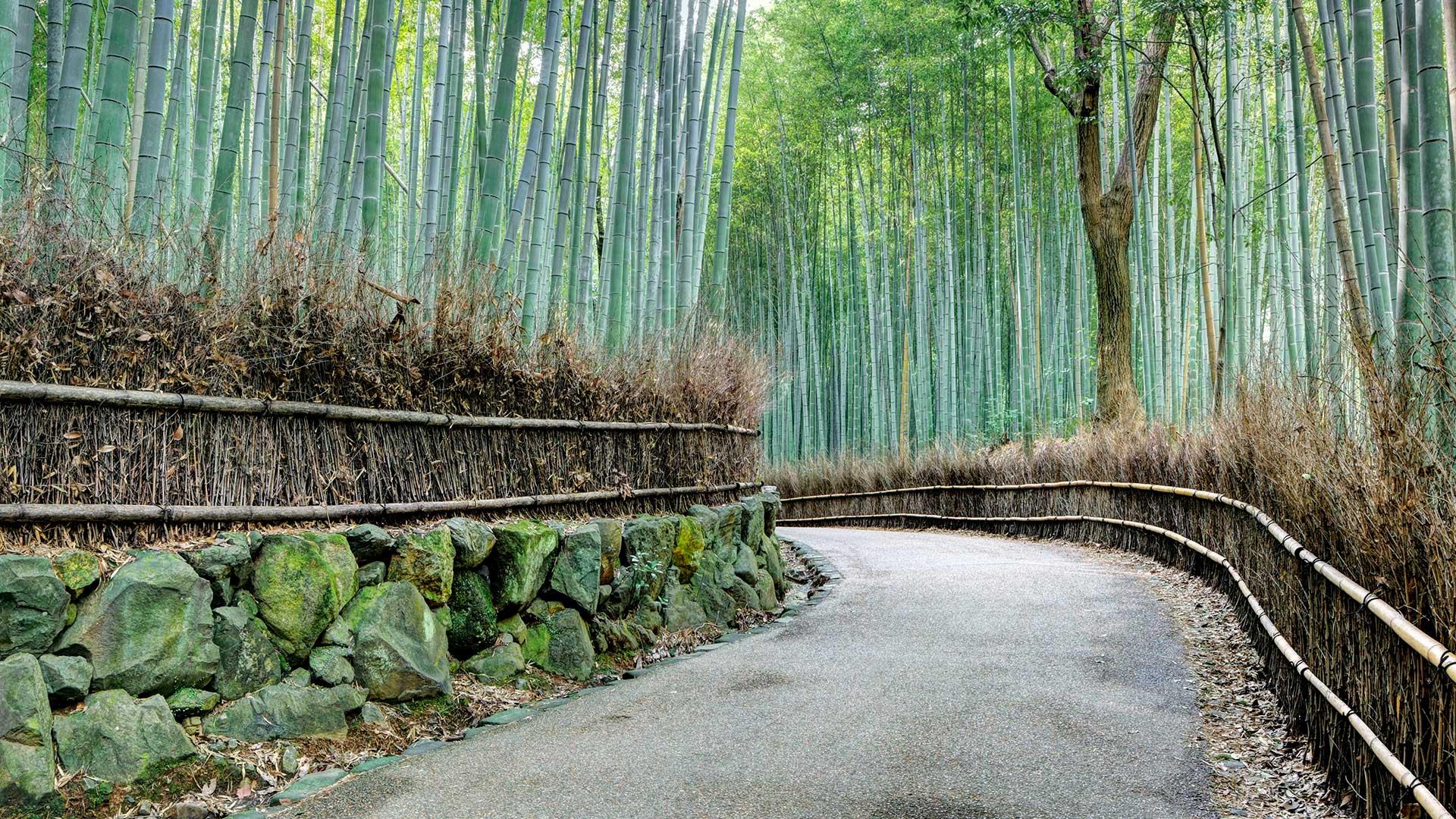 Road through the Arashiyama Bamboo Grove, Kyoto, Japan