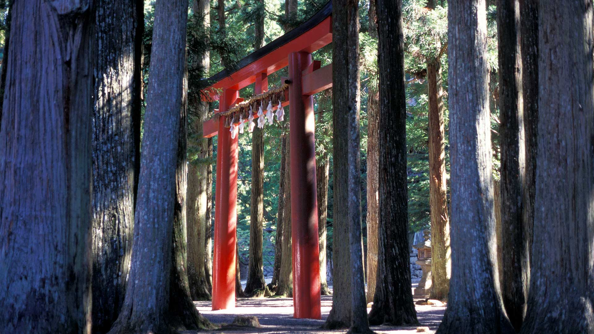 Tori gate in forest on Mount Koya