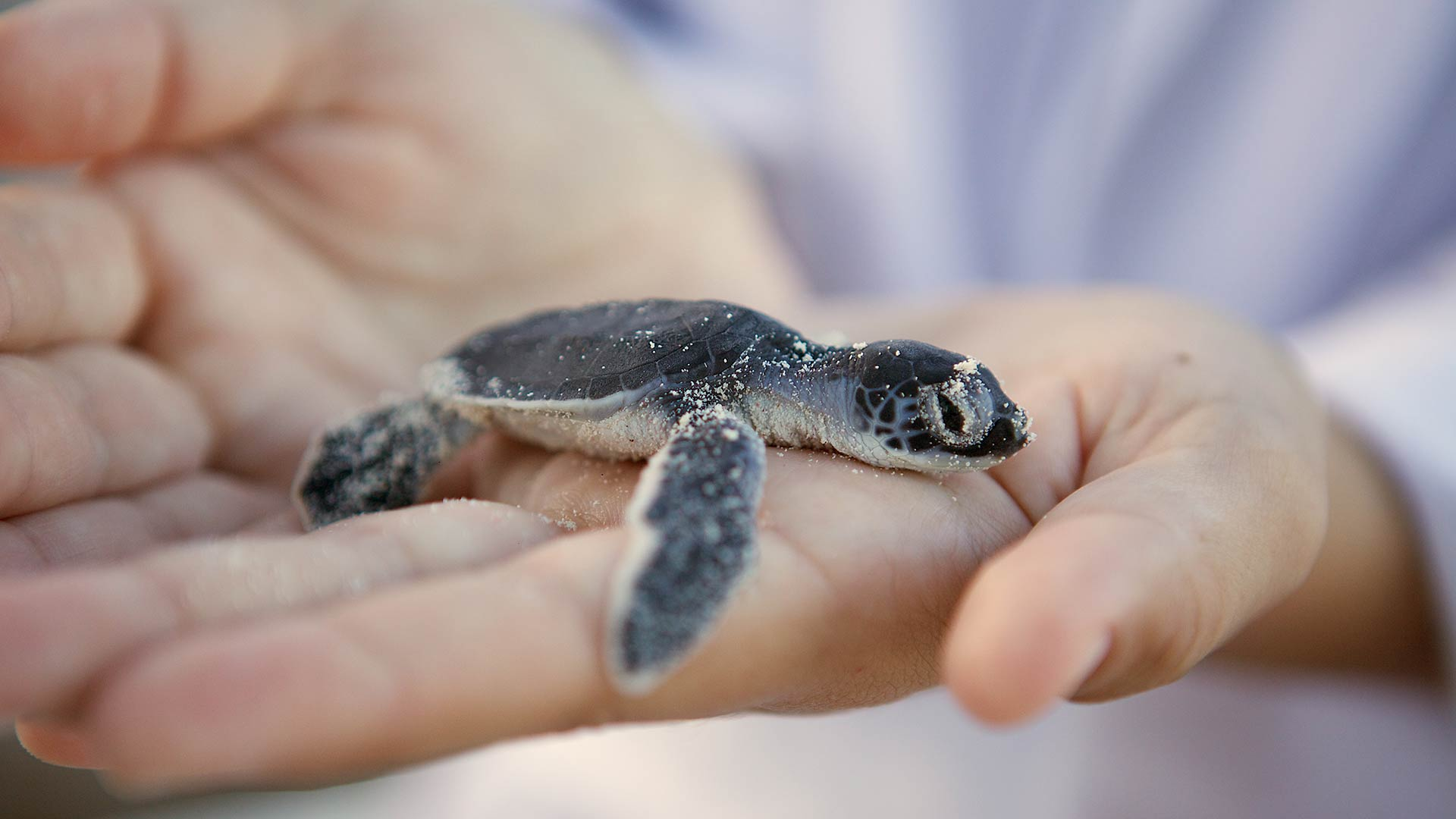 Turtle in Riviera Maya