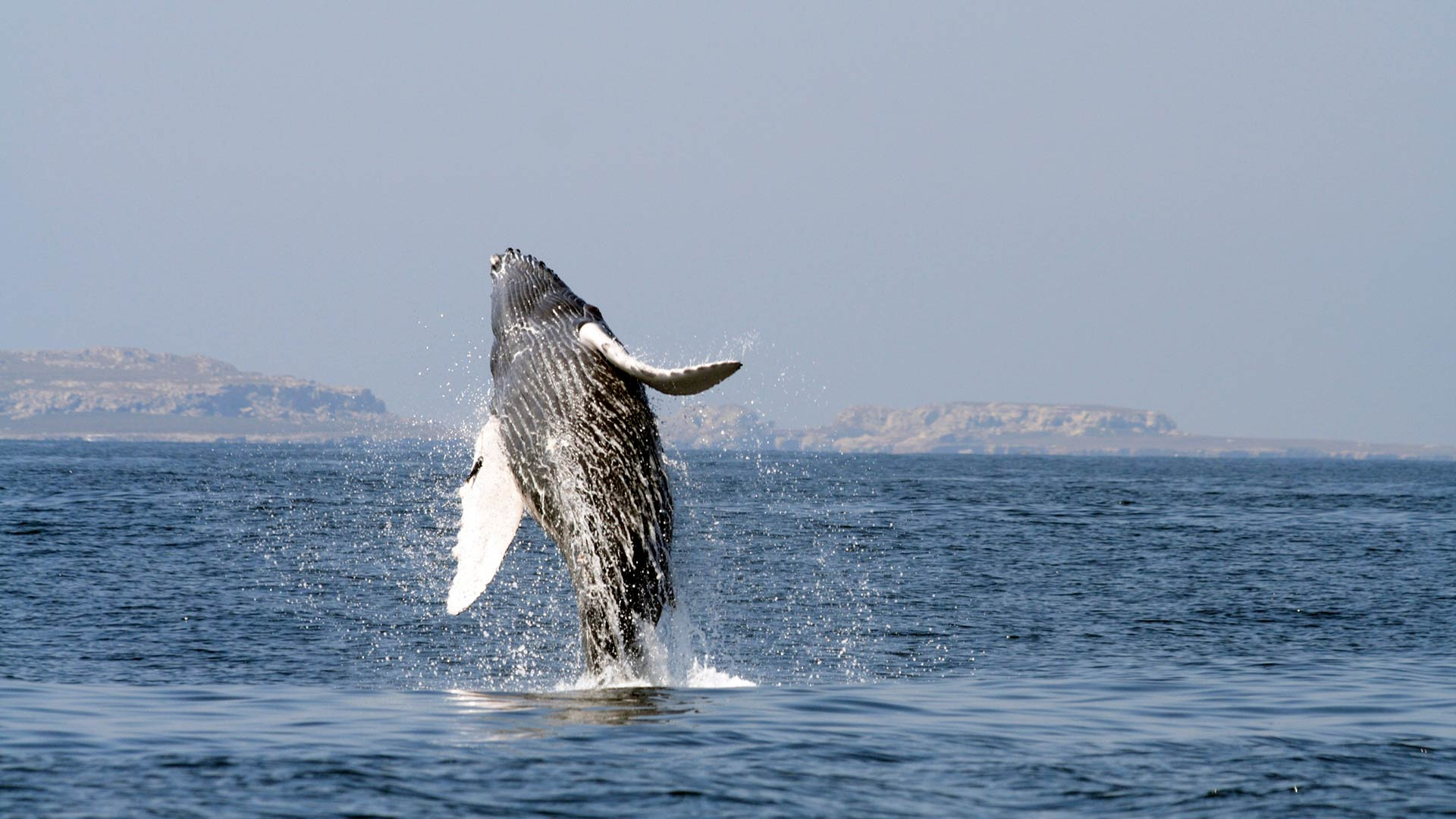 Whale in Los Cabos