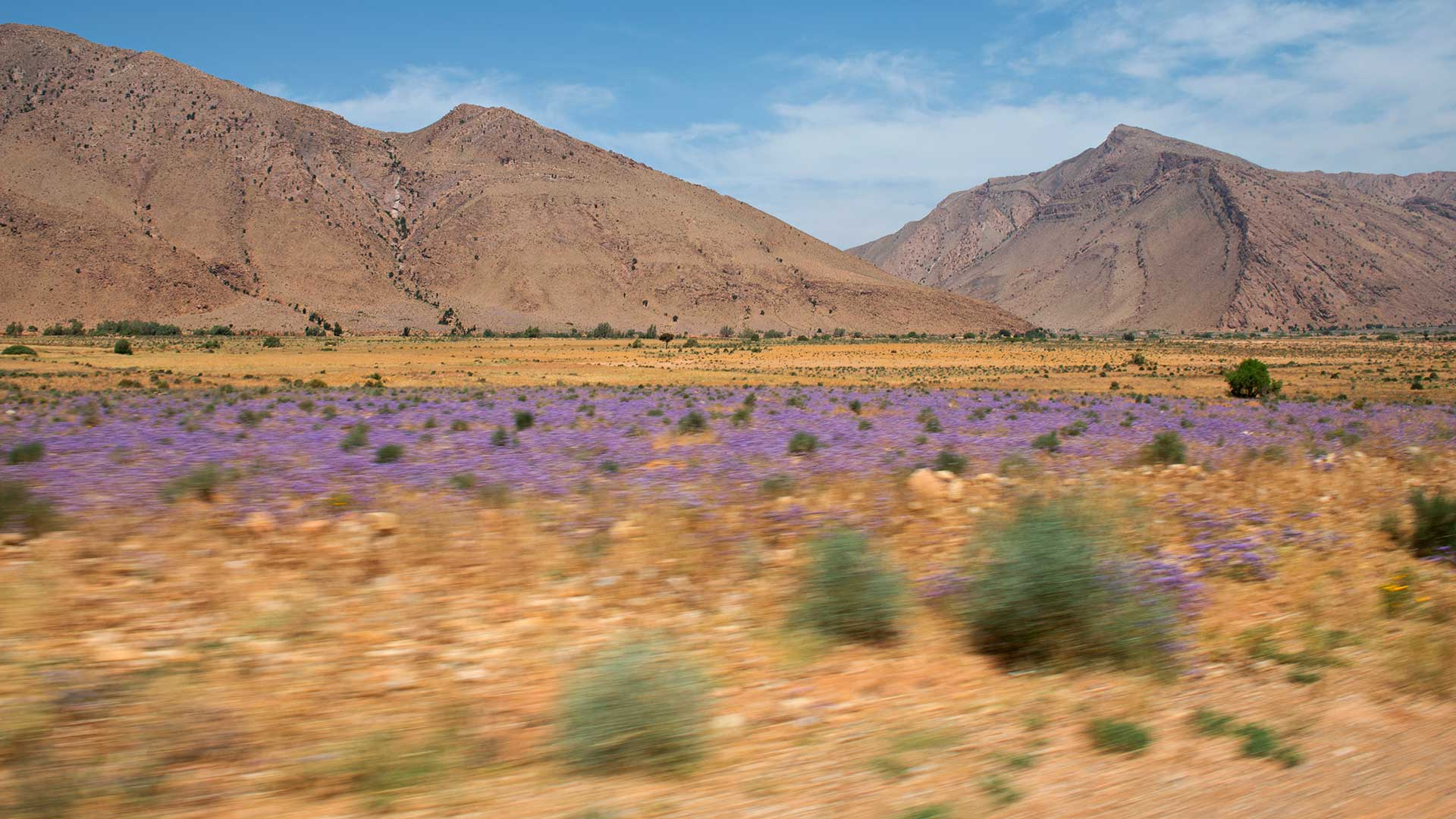 Desert mountain and flowers