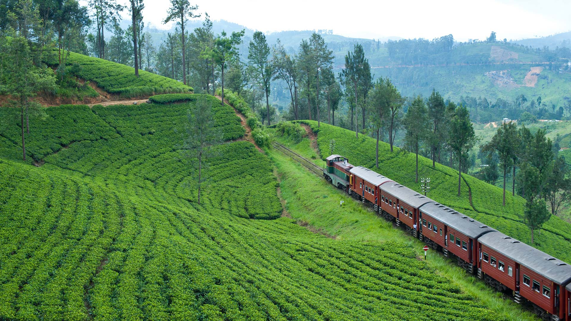 Train traveling through the scenic tea country, Sri Lanka