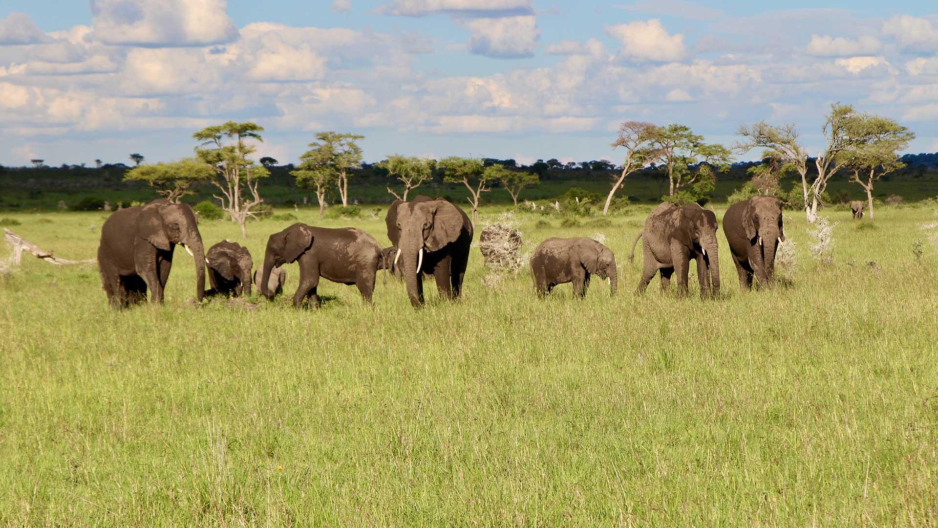 Singita elephants, Tanzania.
