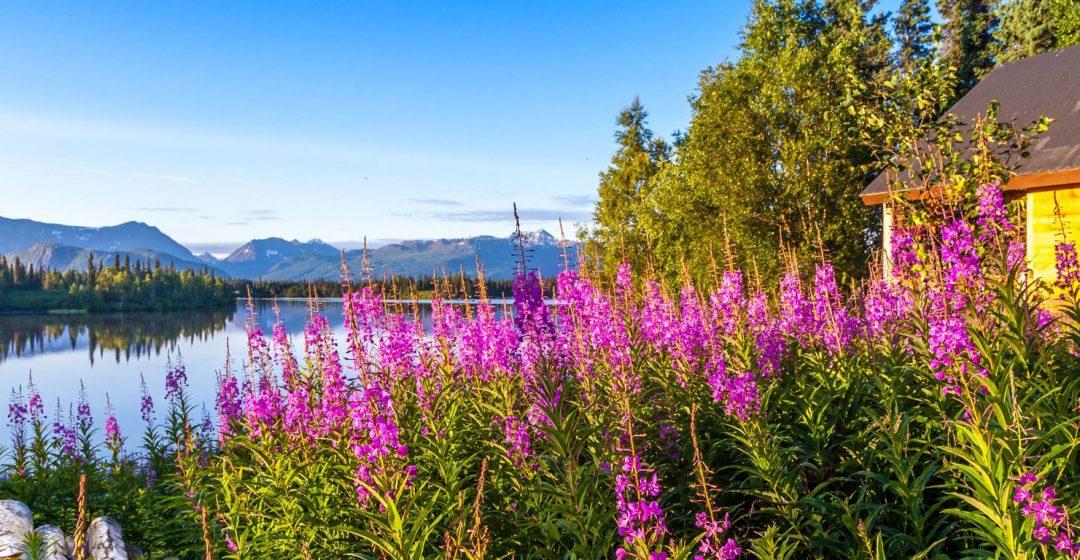 View from Red Lake Trail, Winterlake Lodge, Alaska