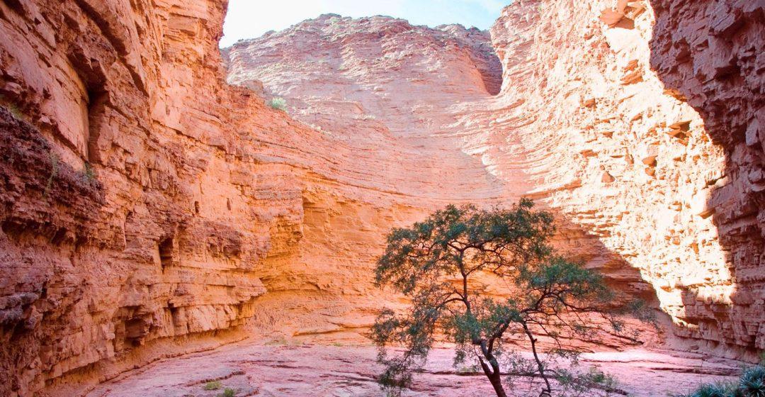 A tree stands in the Garganta del Diablo canyon near Salta, Argentina