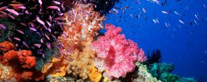 Australia, Great Barrier Reef, Pixie Pinnacle With Colorful Soft Coral
