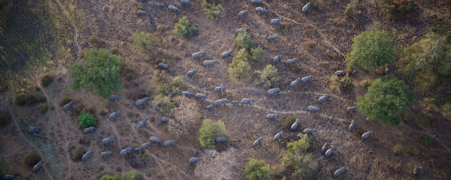 Aerial view of a herd of elephants in Zakouma National Park, Chad