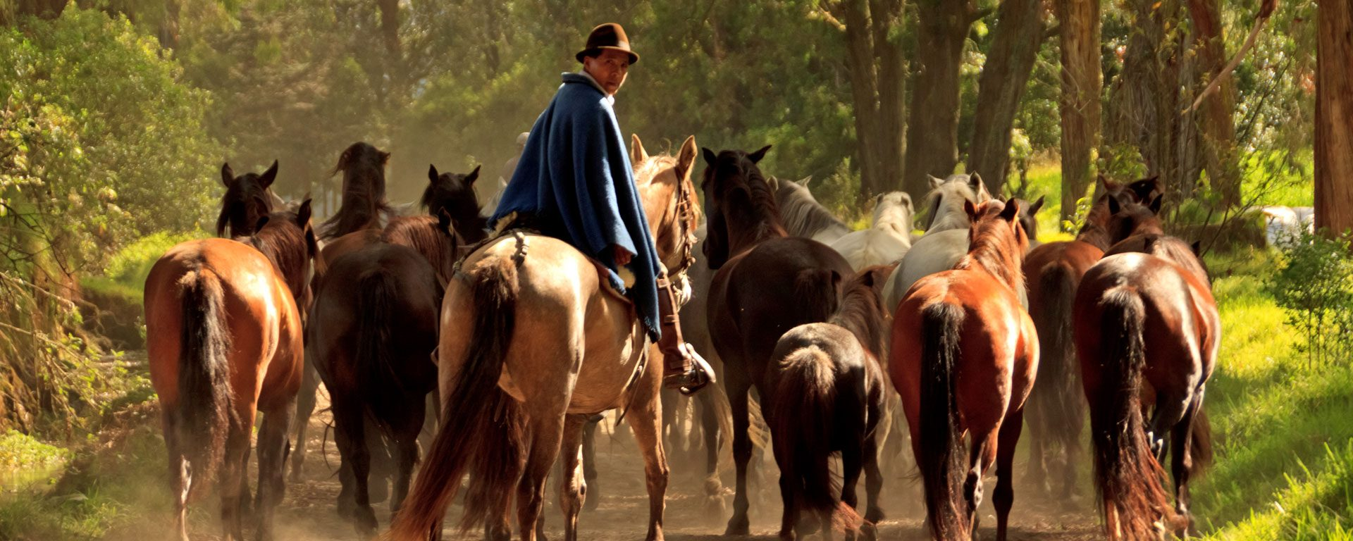 Man leading horses down a dirt road near Hacienda Zuleta in the highlands of Ecuador