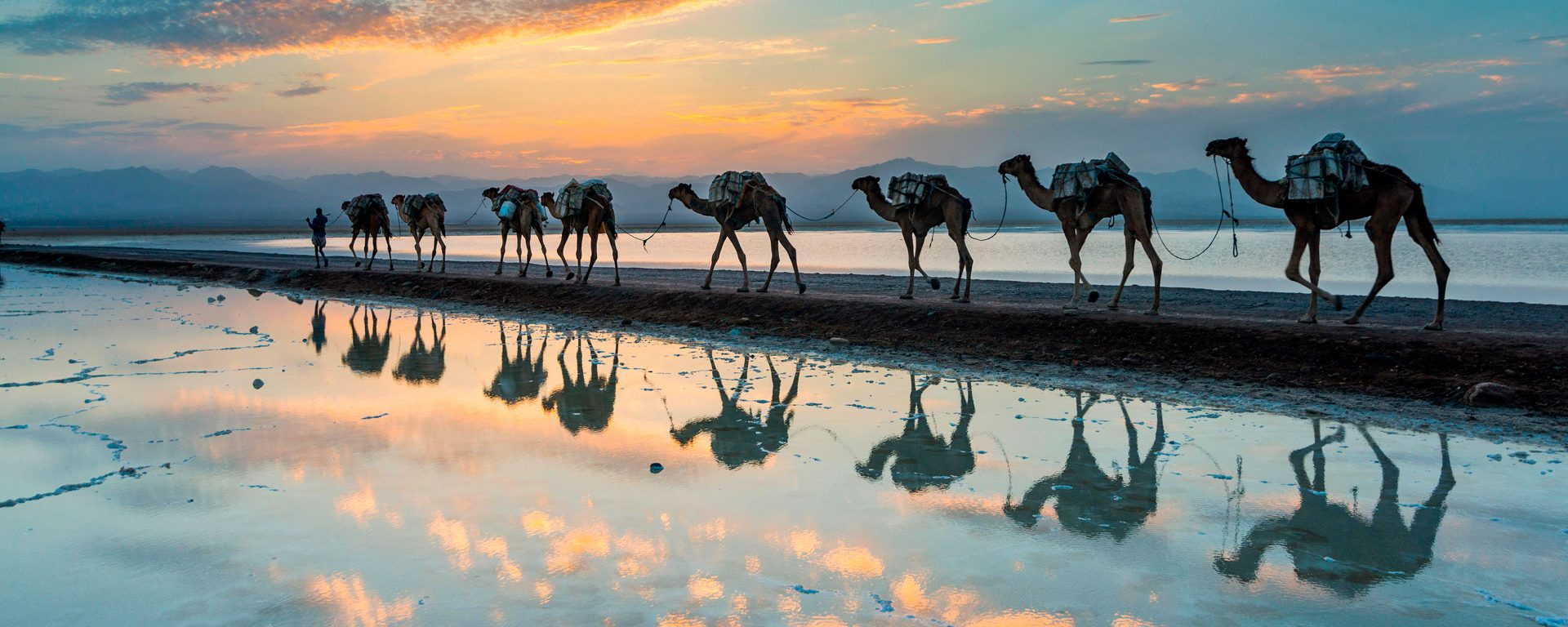 Camels walking through a salt lake in the Danakil Depression, Ethiopia