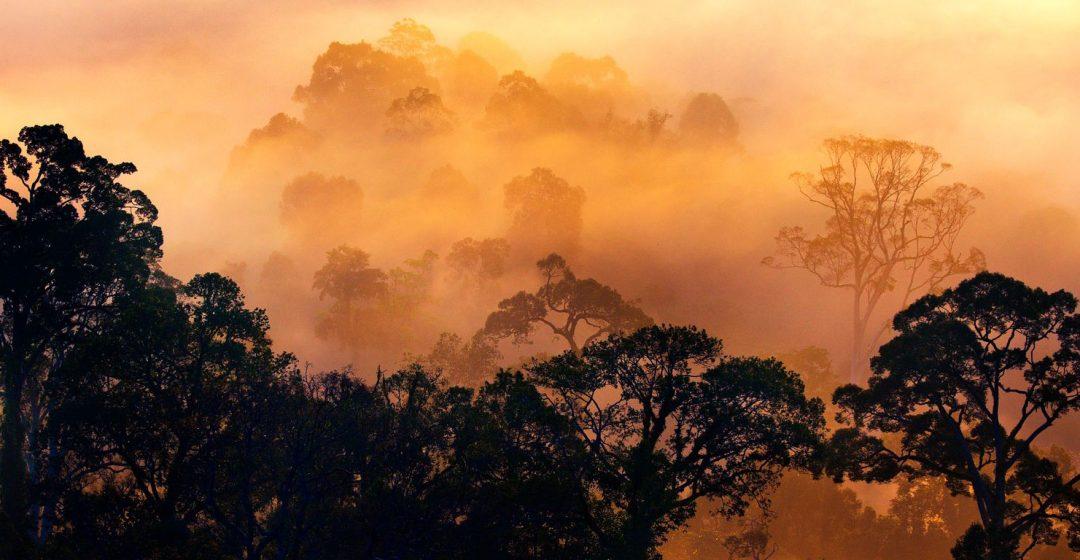 Rain forest at dawn in the Danum Valley, Borneo, Malaysia