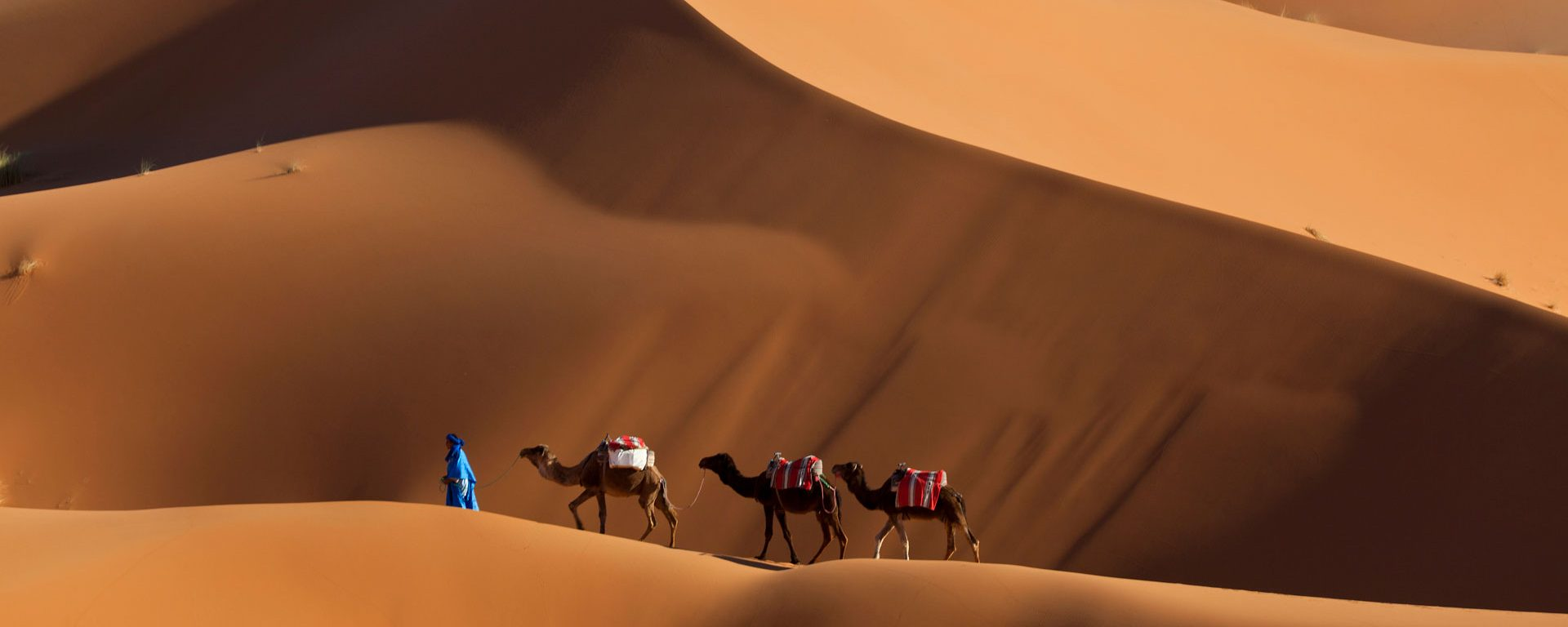 Man guiding camels across the dunes in Erg Chebbi, Morocco