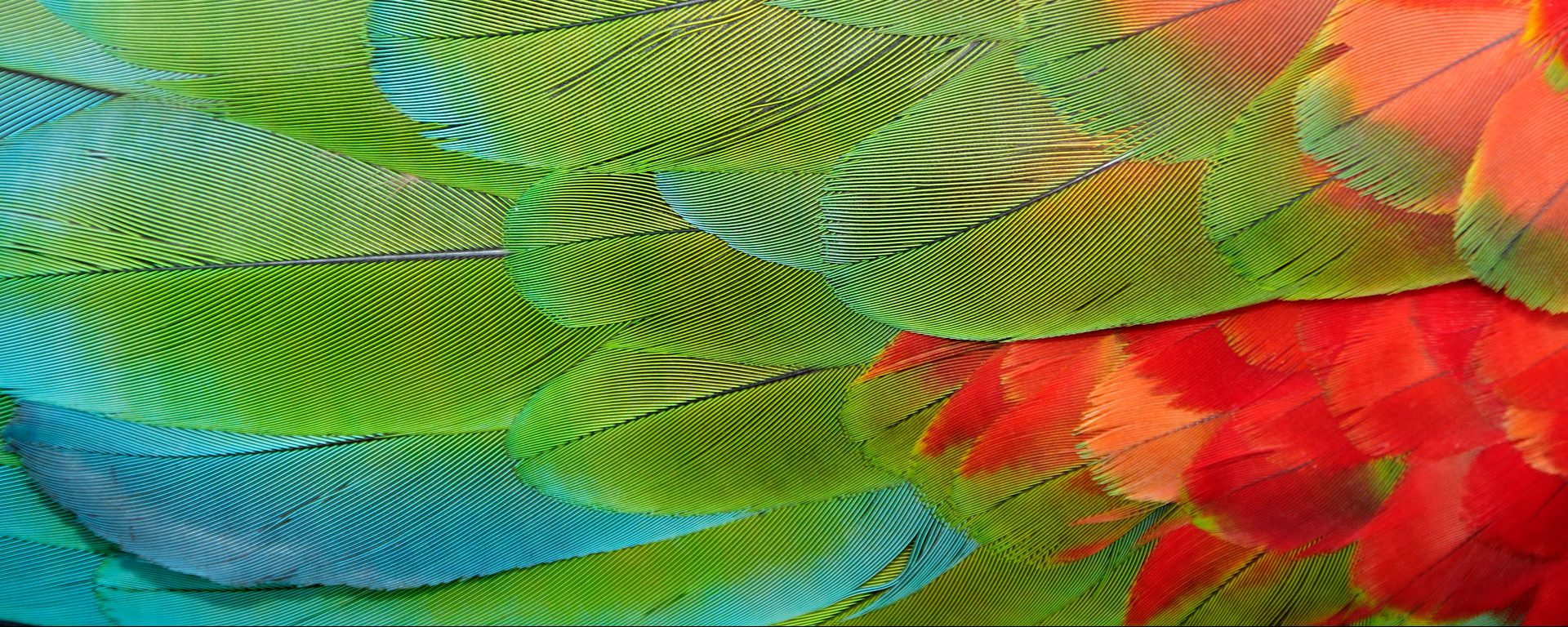 Parrot feathers at Bocas del Toro near Isla Colon, Panama