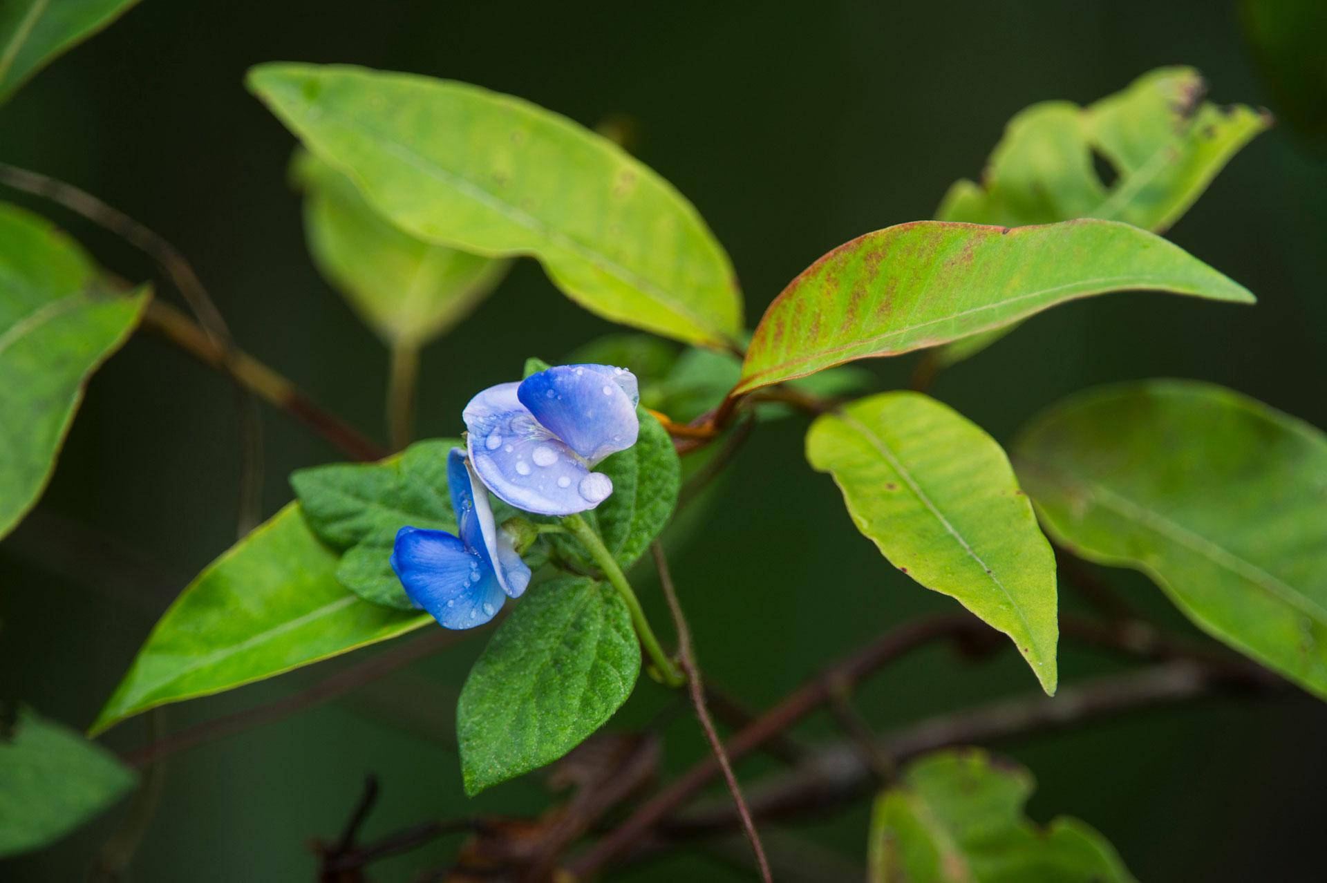 Rainforest flower in Odzala-Kokoua National Park