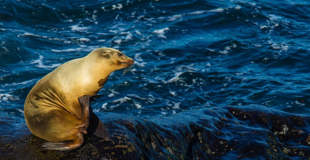 Sea lions playing on rocks in the water