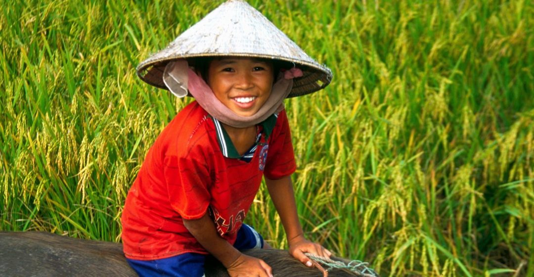 Vietnamese boy riding water buffalo in a rice field in the Mekong River Delta, Vietnam