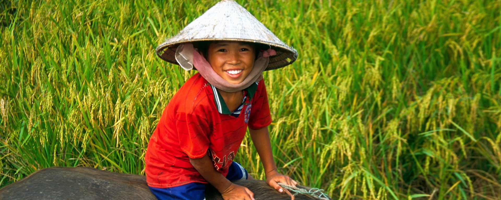 Vietnamese boy riding water buffalo in a rice field in the Mekong River Delta, Vietnam
