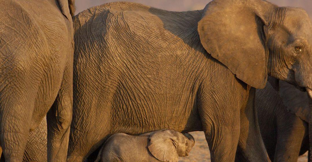 Elephant herd in Hwange National Park, Zimbabwe