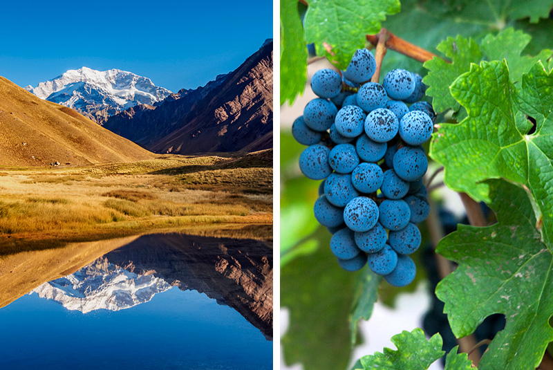 Mount Aconcagua and vineyard in Mendoza region, Argentina