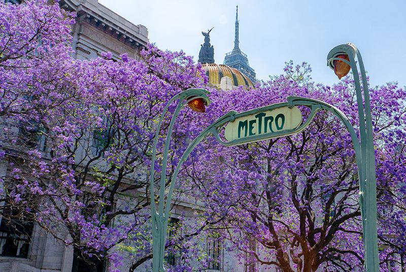 Metro station and jacaranda trees in Mexico City, Mexico