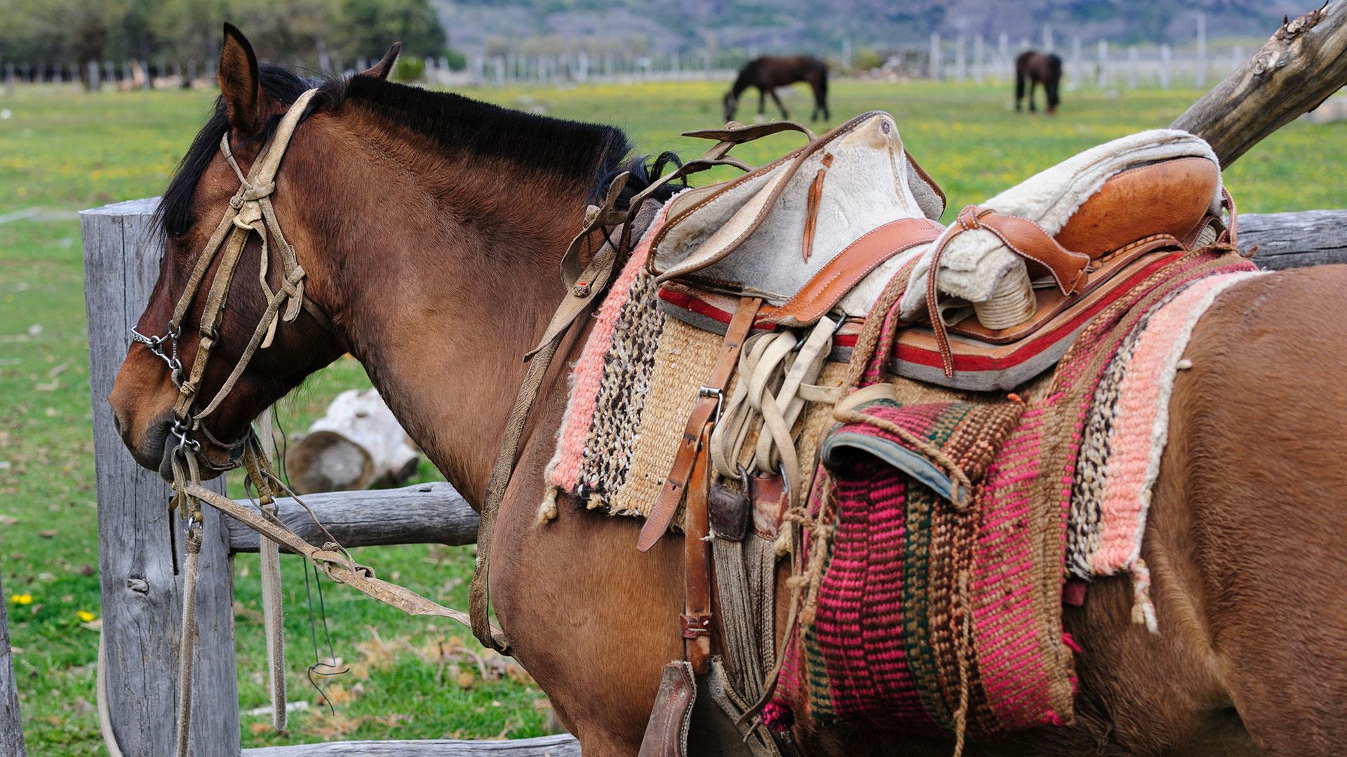 Horse with traditional Chilean saddle, Cerro Castillo, Chile