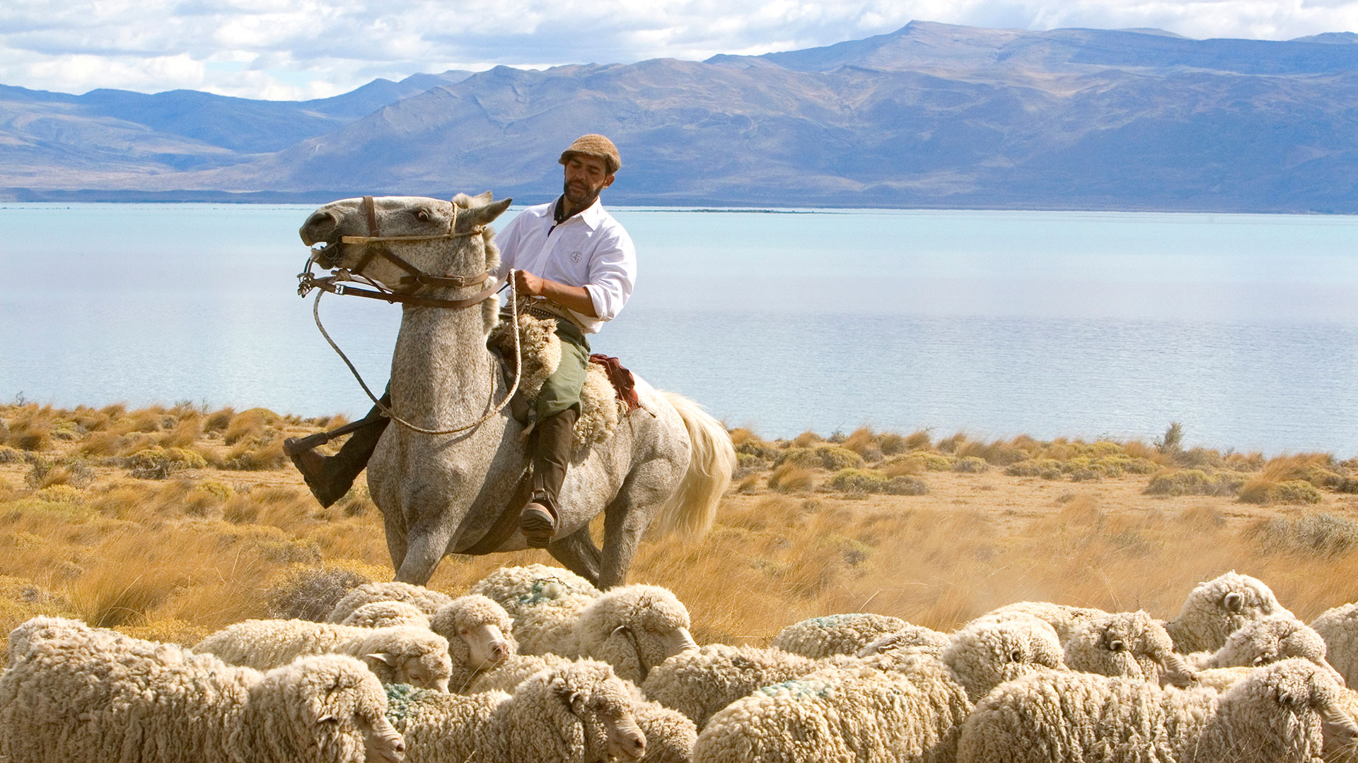 Gaucho herds sheep near Lago Argentina near El Calafate, Argentina