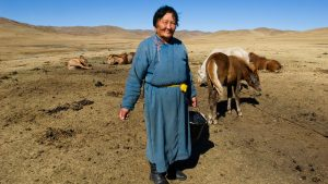 Nomad woman milking mares in Mongolia