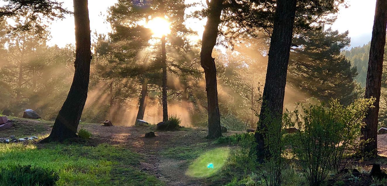 Sunlight peering through trees.