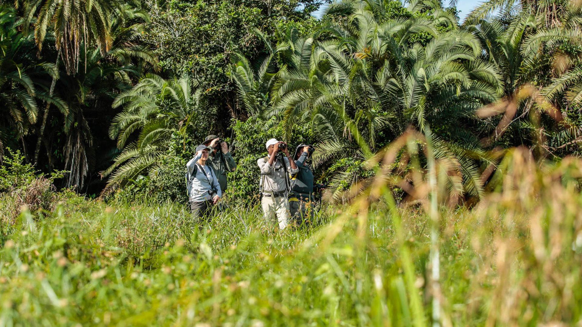 Safari-goers walking in the Congo Basin, Republic of Congo