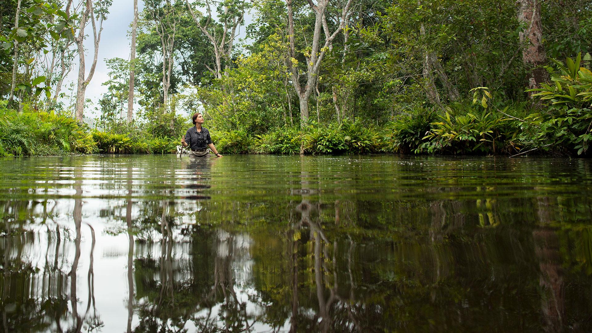Woman wading through waist-high water near Lango Camp, Congo