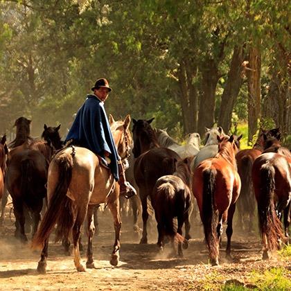 Man with horses at Hacienda Zuleta, Ecuador