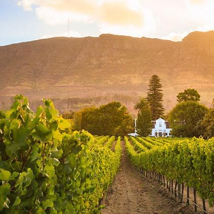 Vineyards in Constantia, Cape Winelands, South Africa