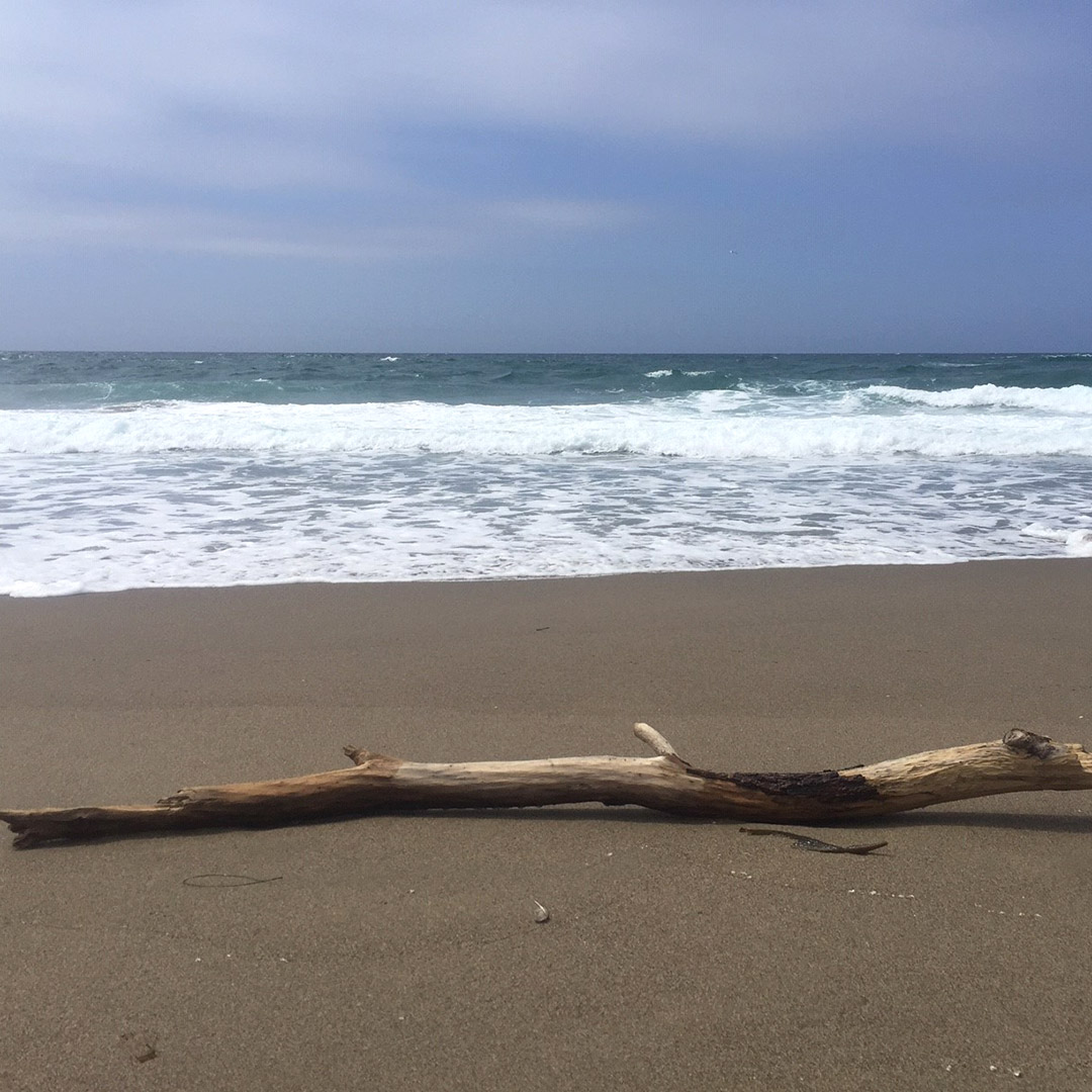 A piece of driftwood and waves at North Beach, Point Reyes