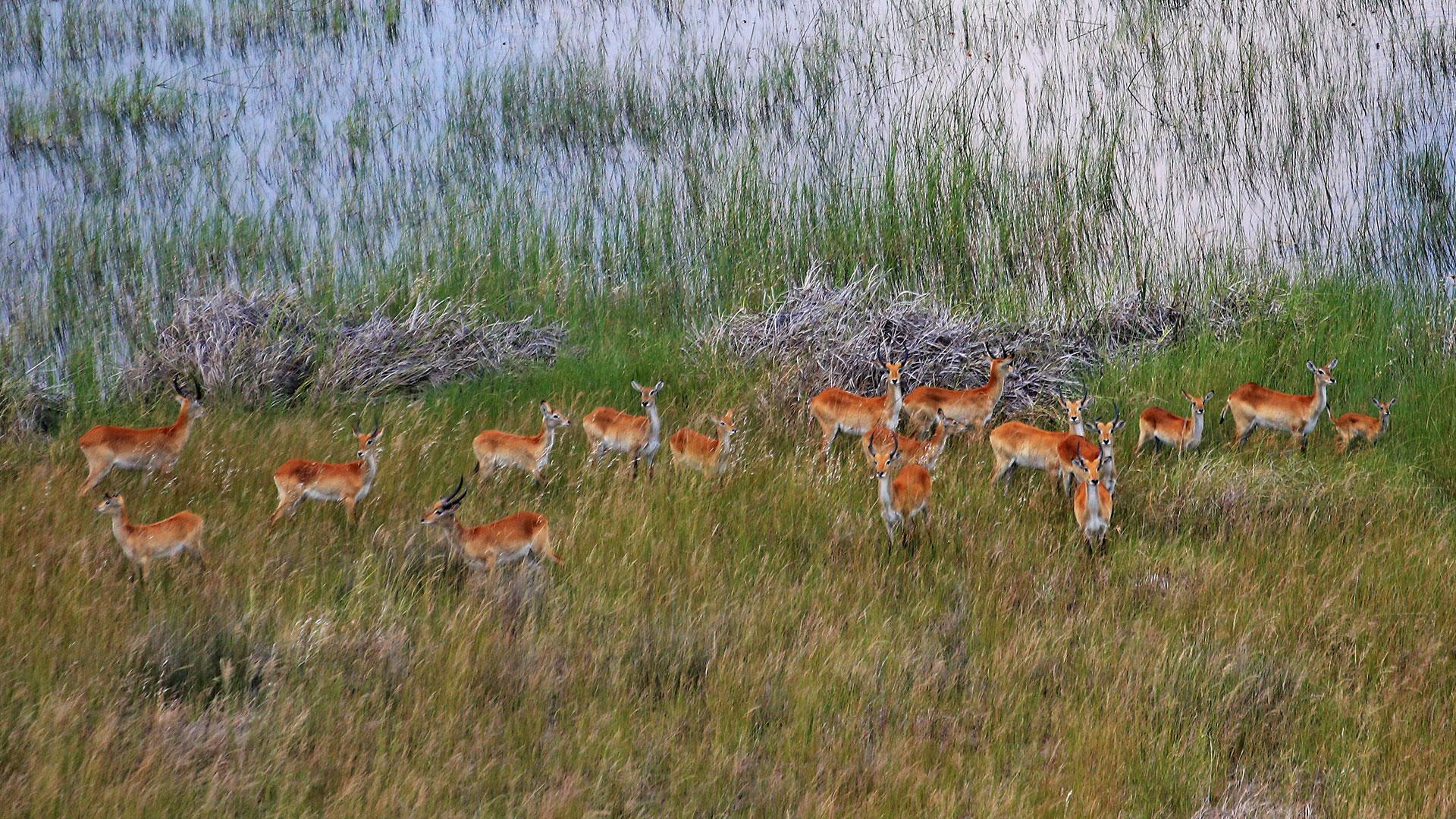 Wildlife in the floodplains of the Okavango Delta, Botswana
