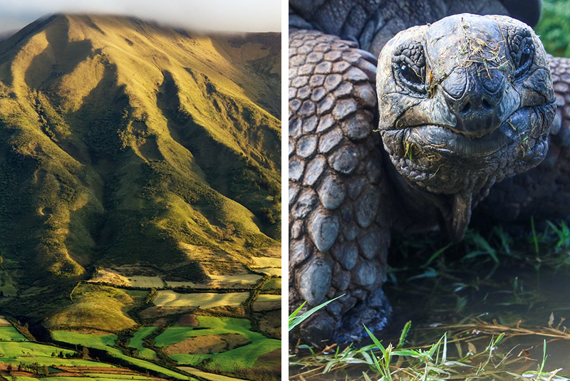 Fields on slopes of Cotacachi Volcano and a giant tortoise in the Galapagos, Ecuador