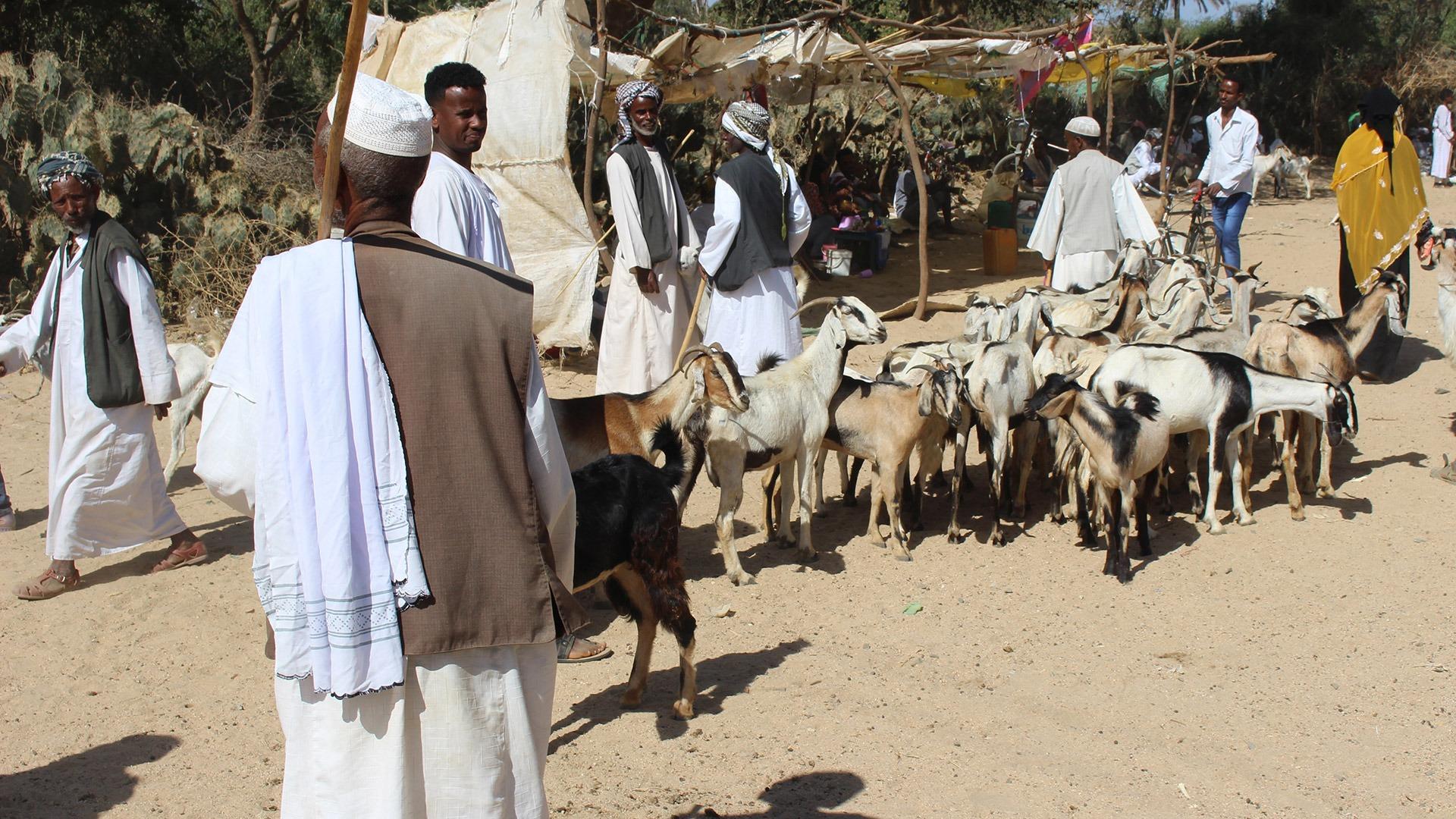 Goat herders at the market in Keren, Eritrea